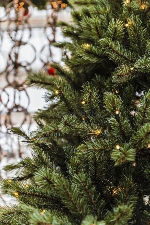 Δέντρο πεύκων Χριστουγέννων με τα φω'τα στοκ φωτογραφίες