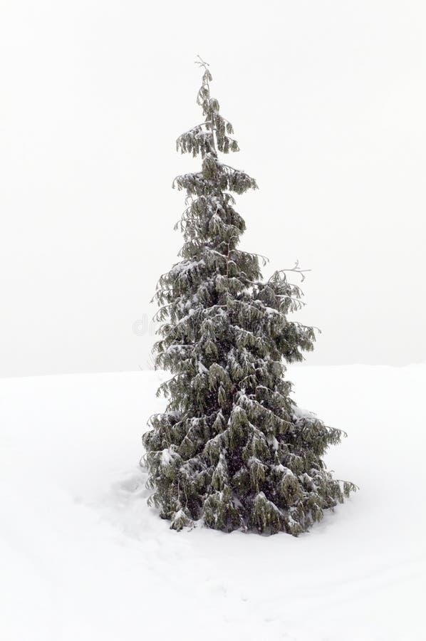 δέντρο πεύκων Χριστουγένν&om στοκ φωτογραφία