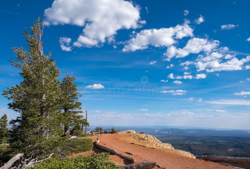 Δέντρο πεύκων Bristlecone σημείου Yovimpa στοκ εικόνα