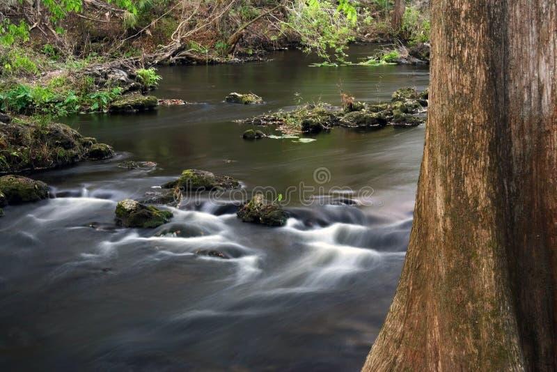 δέντρο ποταμών κυπαρισσιών στοκ φωτογραφία με δικαίωμα ελεύθερης χρήσης