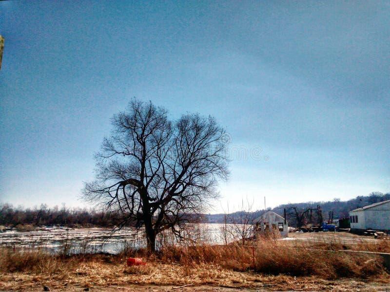 Δέντρο ποταμών του Μισσούρι στην τράπεζα Atchison Κάνσας στοκ φωτογραφίες με δικαίωμα ελεύθερης χρήσης