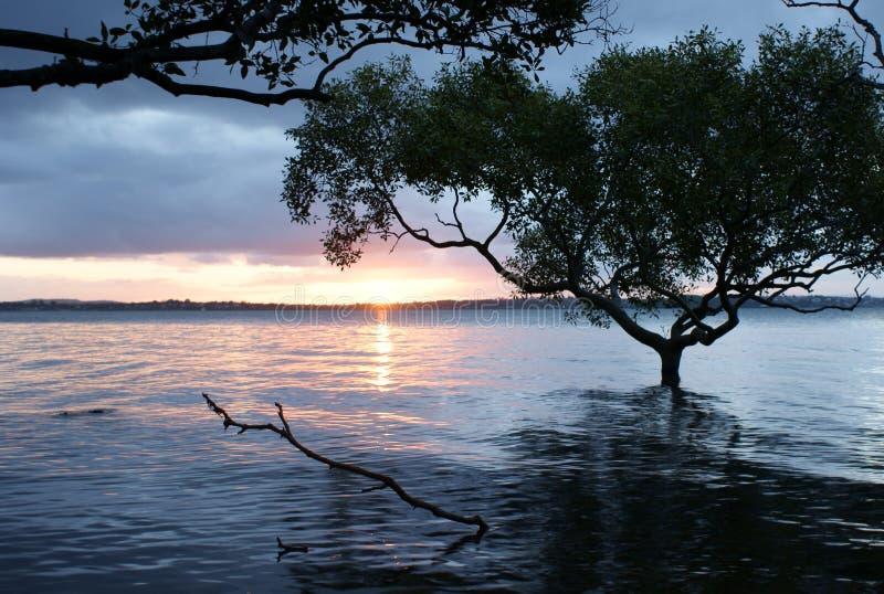 δέντρο ποταμών στοκ φωτογραφία με δικαίωμα ελεύθερης χρήσης
