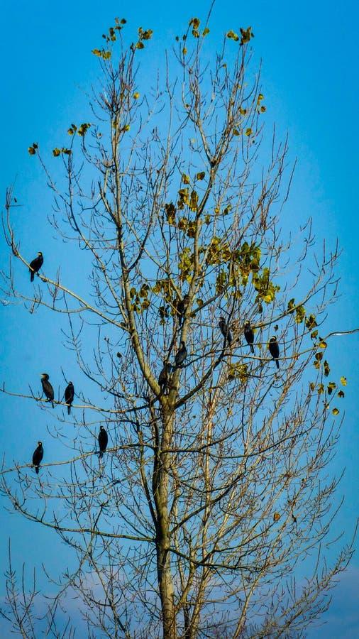 Δέντρο πουλιών στοκ φωτογραφίες