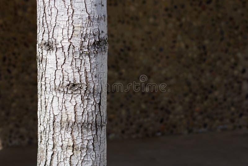 Δέντρο που έχει ένα πρόσωπο στοκ εικόνες