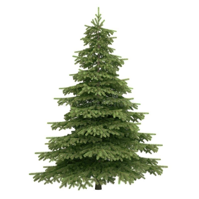 Δέντρο που απομονώνεται κομψό στοκ εικόνες με δικαίωμα ελεύθερης χρήσης