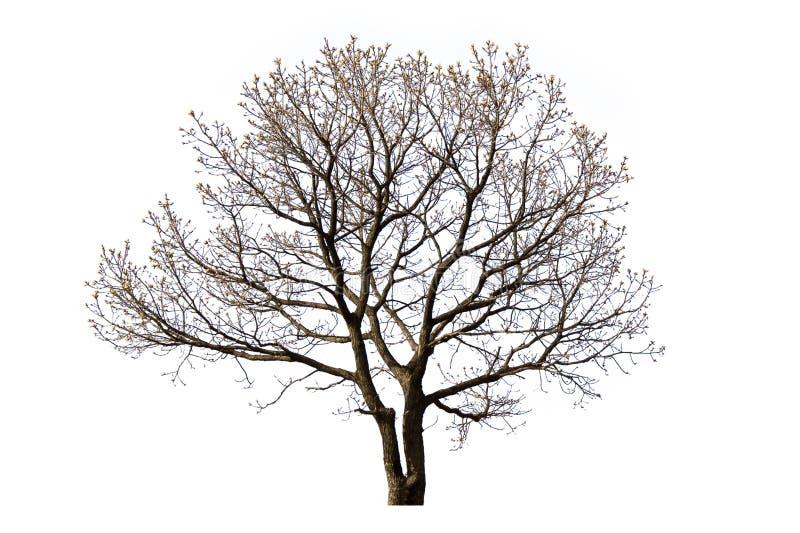 Δέντρο που απομονώνεται νεκρό στοκ εικόνες με δικαίωμα ελεύθερης χρήσης