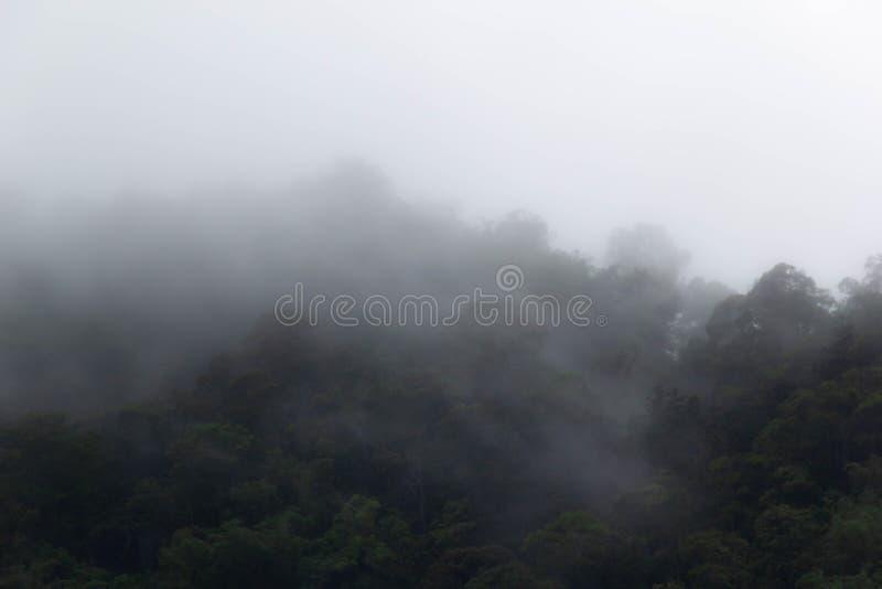Δέντρο που καλύπτεται με την υδρονέφωση στοκ εικόνες