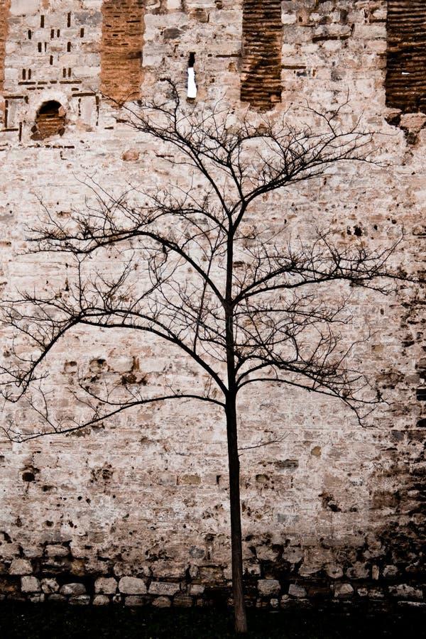 δέντρο που μαραίνεται μόνο στοκ φωτογραφία