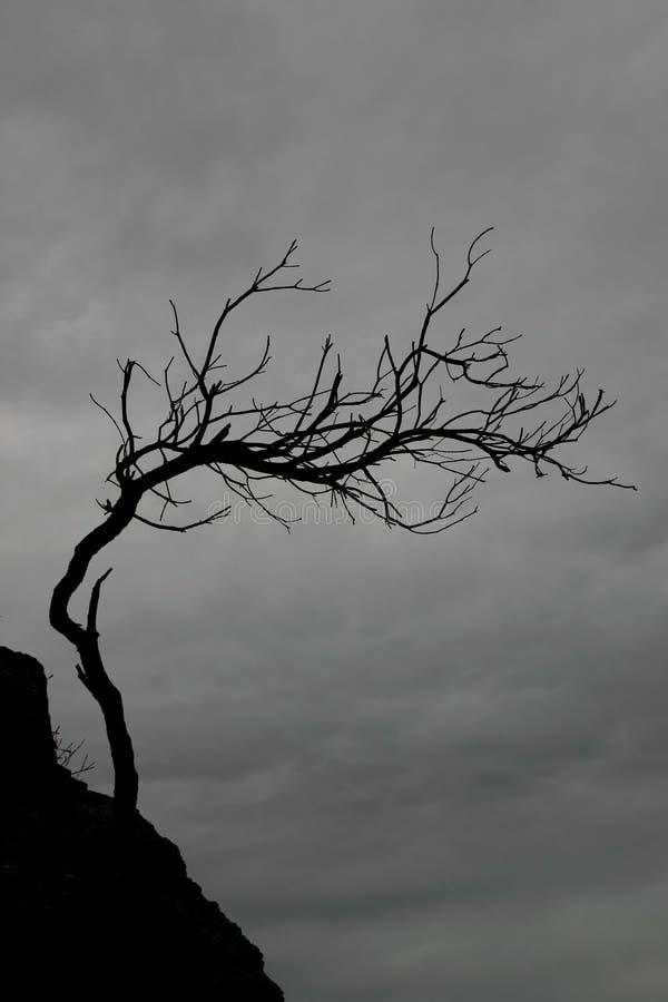 Download δέντρο που ξεπερνιέται στοκ εικόνα. εικόνα από scary, γήρανσης - 1532419