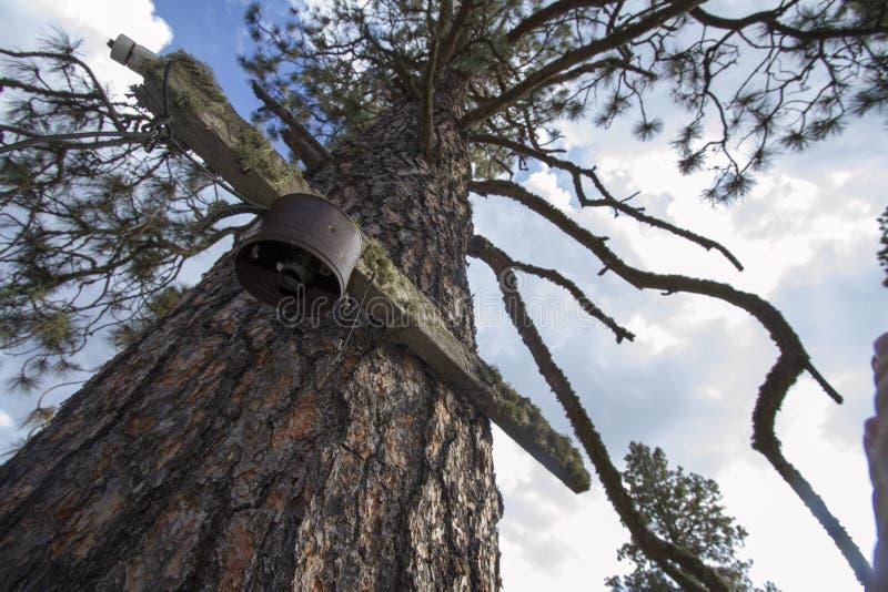 Δέντρο που χρησιμοποιείται ως ηλεκτροφόρο καλώδιο στην εγκαταλειμμένη πόλη στοκ φωτογραφίες
