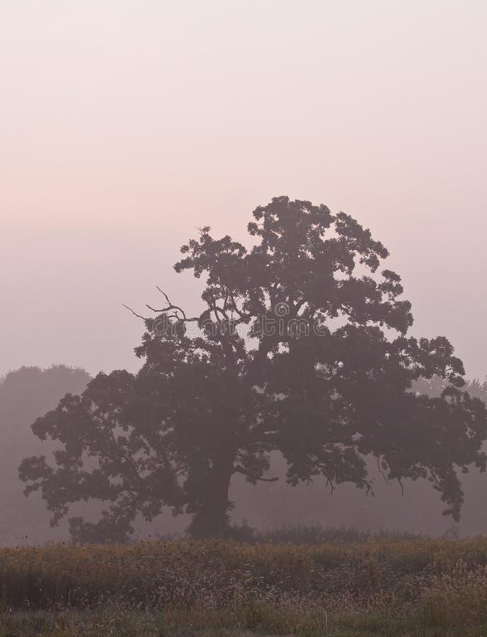 δέντρο πρωινού υδρονέφωση&s στοκ εικόνες