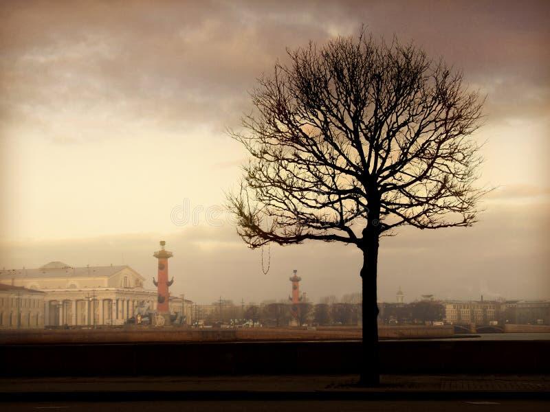 δέντρο πρωινού στοκ εικόνα