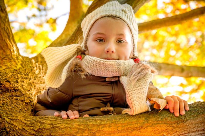 Δέντρο πτώσης φθινοπώρου στοκ φωτογραφίες