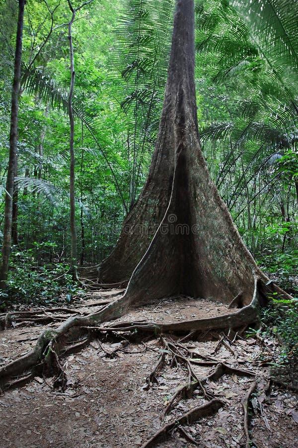 Δέντρο ρίζας στηριγμάτων στοκ φωτογραφίες
