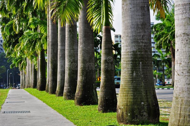 δέντρο σειρών φοινικών στοκ εικόνες με δικαίωμα ελεύθερης χρήσης