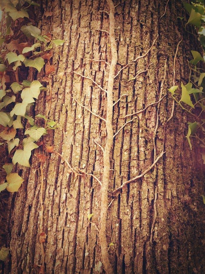 Δέντρο σε ένα δέντρο στοκ φωτογραφίες