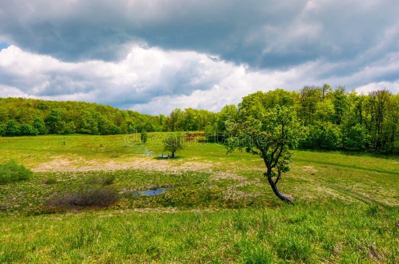 Δέντρο σε ένα εξόγκωμα πέρα από το χλοώδες λιβάδι στοκ εικόνα με δικαίωμα ελεύθερης χρήσης