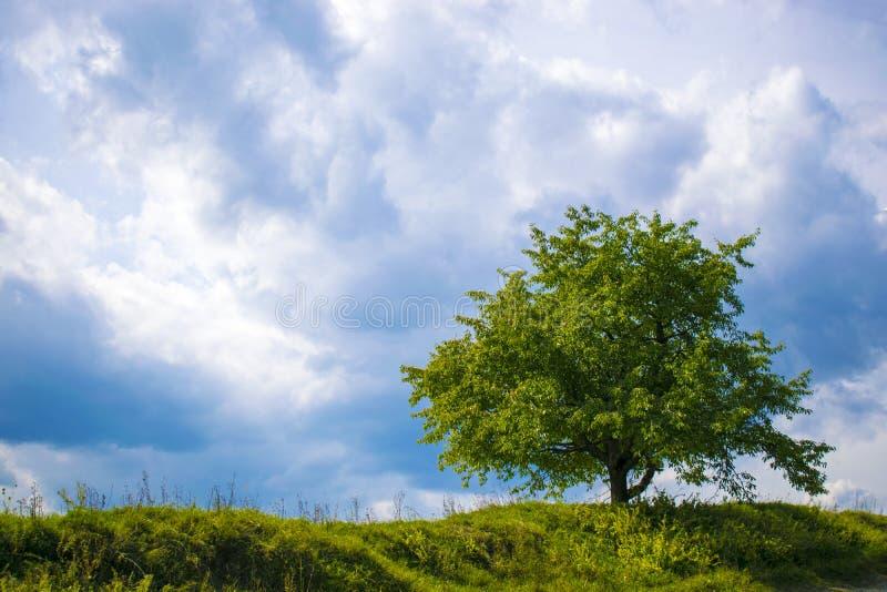 Δέντρο σε ένα υπόβαθρο των απειλητικών σύννεφων στοκ εικόνα με δικαίωμα ελεύθερης χρήσης