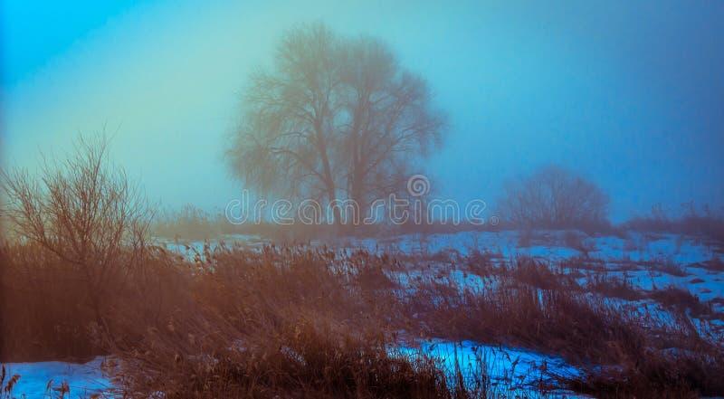 Δέντρο σε μια ομίχλη στοκ φωτογραφίες