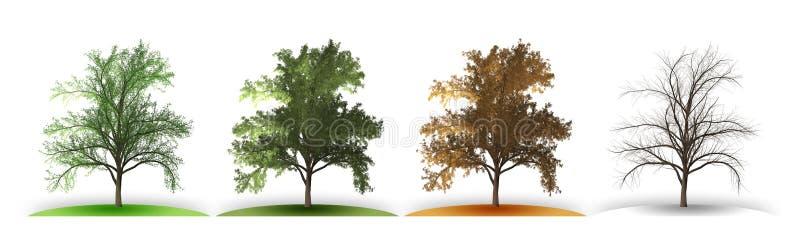 δέντρο σε τέσσερις εποχές διανυσματική απεικόνιση