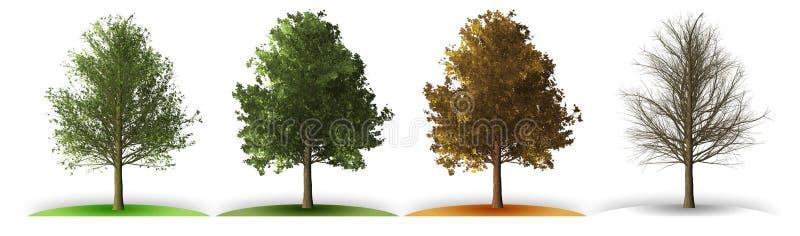 δέντρο σε τέσσερις εποχές απεικόνιση αποθεμάτων