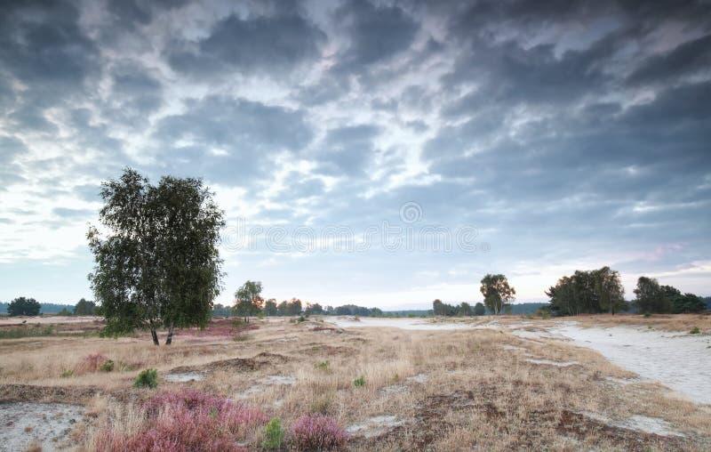 Δέντρο σημύδων, ερείκη στους αμμόλοφους στην ανατολή στοκ εικόνες με δικαίωμα ελεύθερης χρήσης