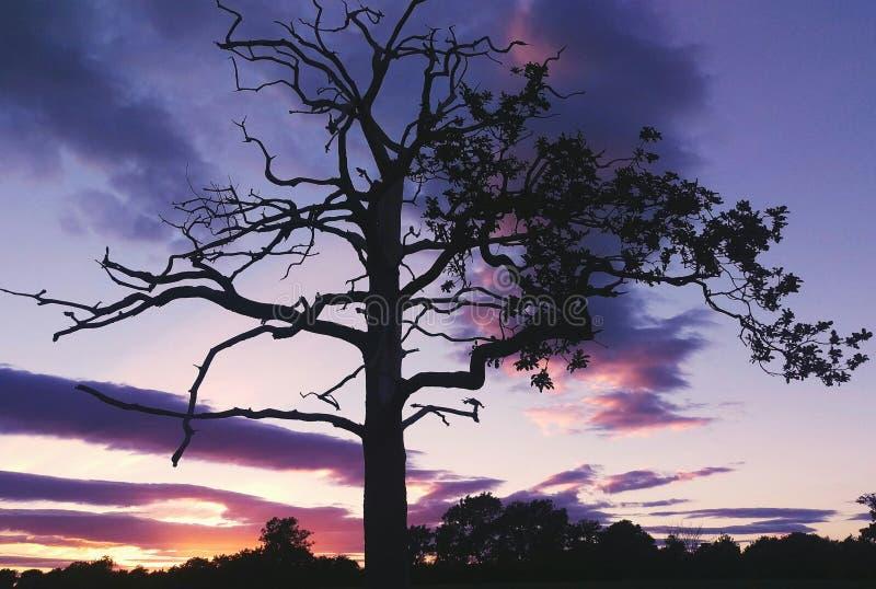 Δέντρο σκελετών μπλε ουρανού στοκ εικόνες