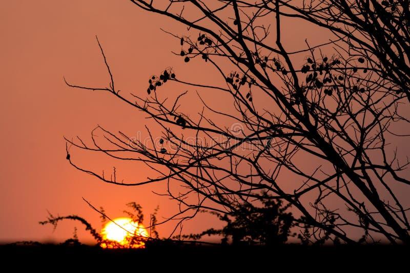 Δέντρο σκιαγραφιών στο ηλιοβασίλεμα στοκ εικόνες με δικαίωμα ελεύθερης χρήσης