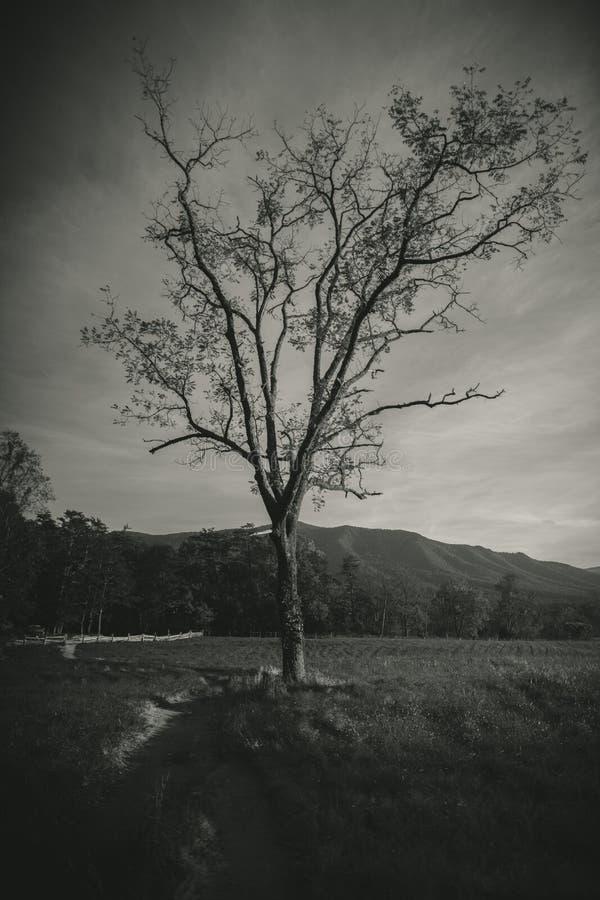 Δέντρο στα βουνά Τένεσι smokey στοκ εικόνες