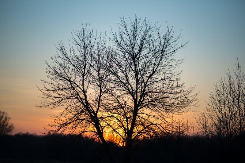 Δέντρο στα πλαίσια της ανατολής στοκ φωτογραφίες
