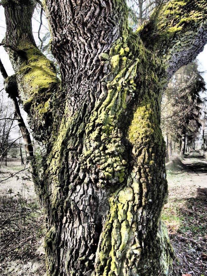 Δέντρο στην εποχή φθινοπώρου στοκ εικόνες