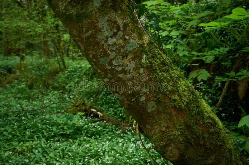 Δέντρο στην εστίαση, υπόβαθρο από την εστίαση στοκ εικόνα με δικαίωμα ελεύθερης χρήσης