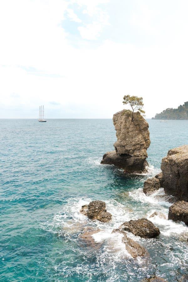 Δέντρο στην πέτρα στη θάλασσα, προσέγγιση γιοτ στοκ φωτογραφίες