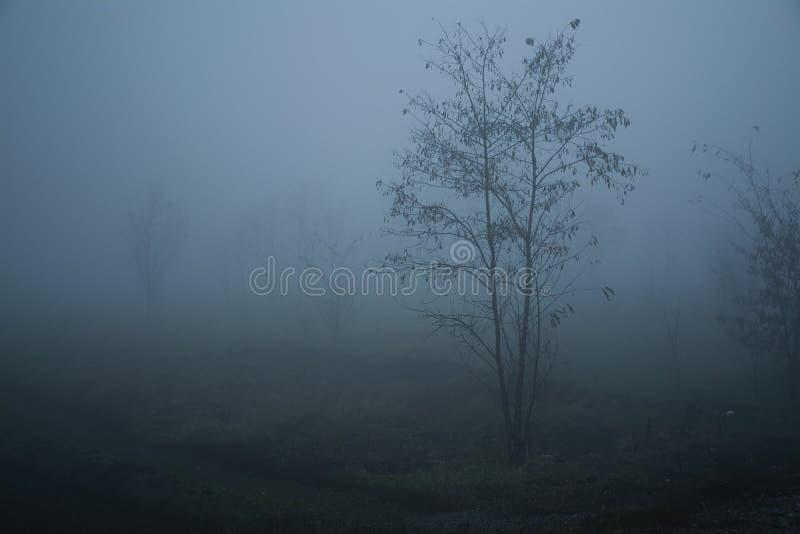 Δέντρο στην παχιά ομίχλη Παχύς σιδηρόδρομος ομίχλης στοκ εικόνα