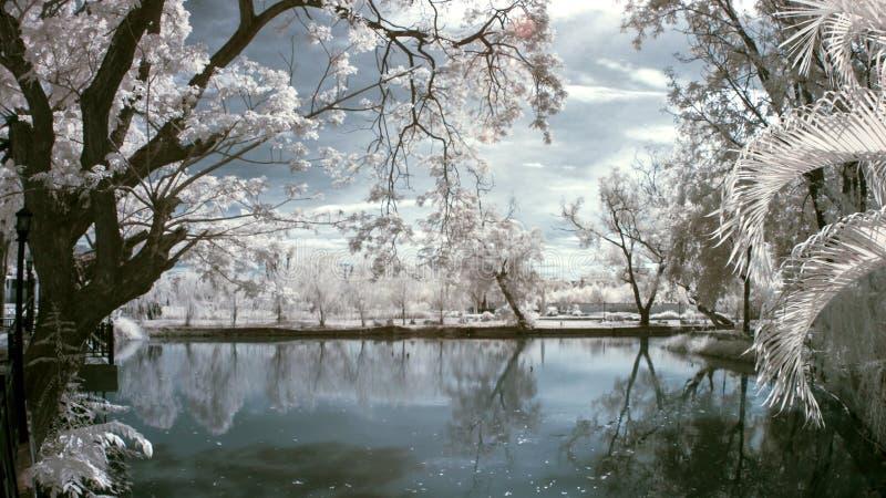 Δέντρο στη λίμνη με κοντά στις υπέρυθρες ακτίνες στοκ εικόνα