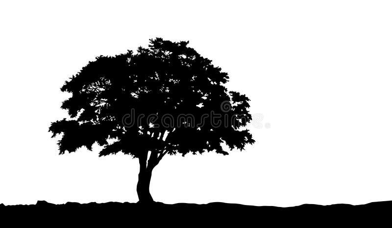 Δέντρο στη σκιαγραφία λόφων στο διάνυσμα ελεύθερη απεικόνιση δικαιώματος