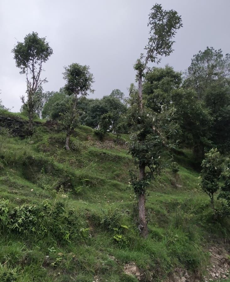 Δέντρο στη φυσική περιοχή λόφων ζουγκλών στοκ φωτογραφία