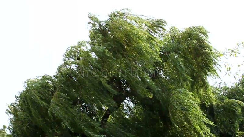 Δέντρο στον αέρα απόθεμα βίντεο