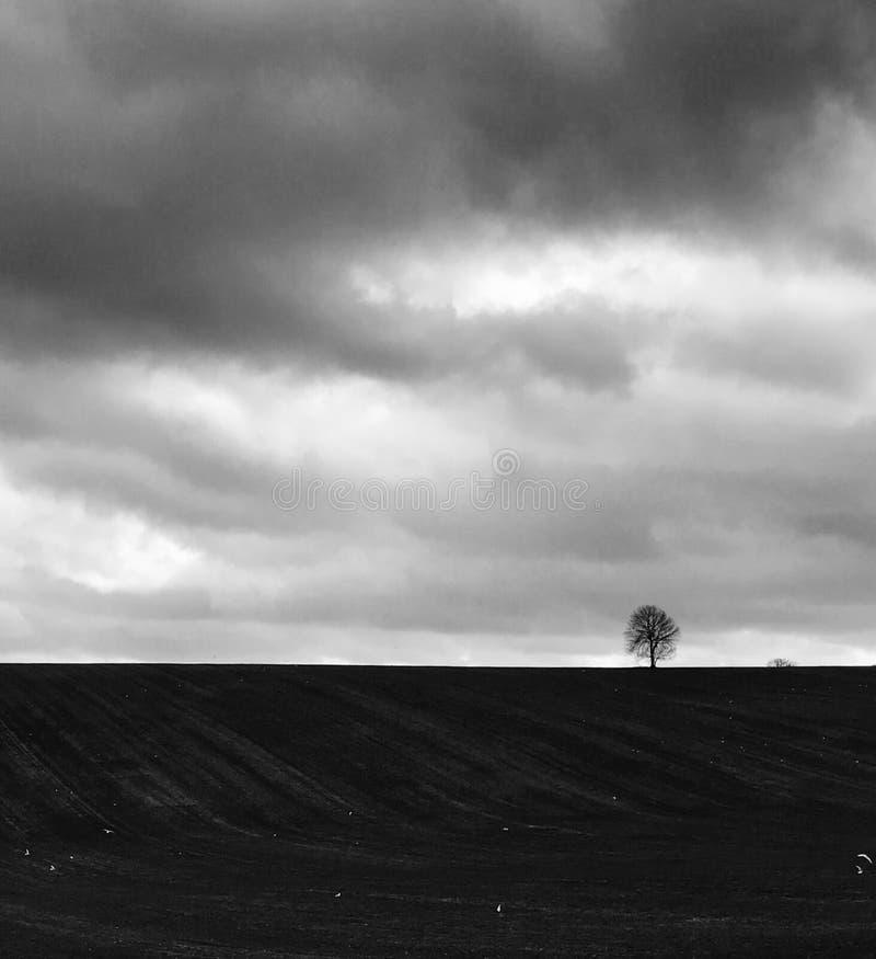 Δέντρο στον ορίζοντα στοκ εικόνες