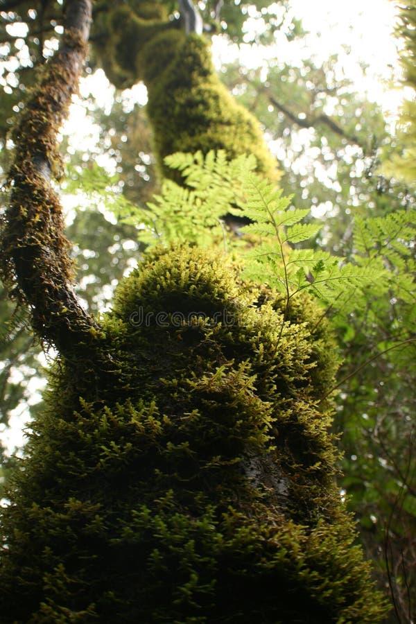 Δέντρο στον ουρανό στοκ εικόνες με δικαίωμα ελεύθερης χρήσης