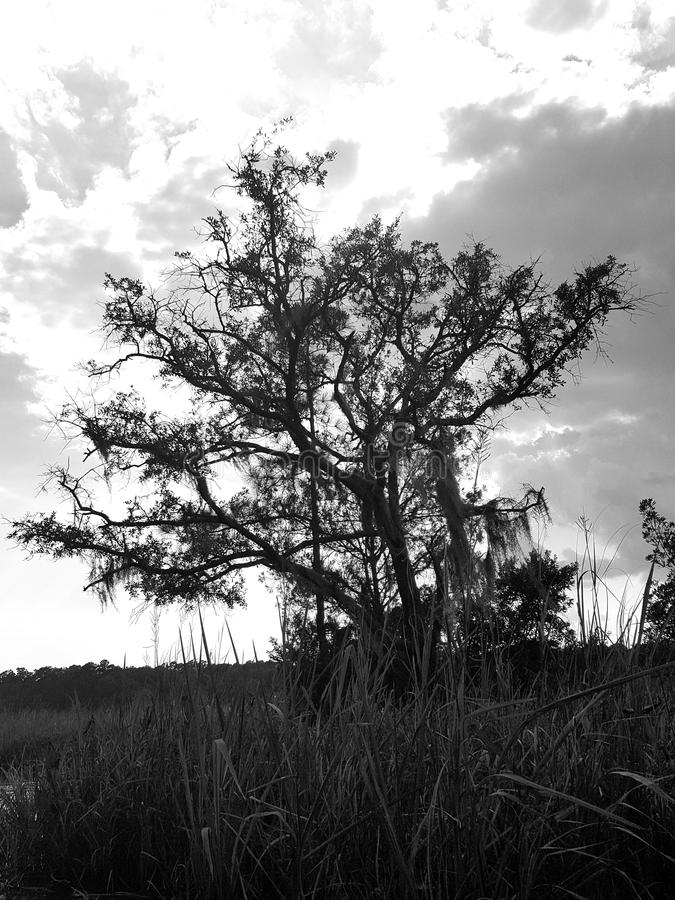 Δέντρο στο έλος γραπτό στοκ φωτογραφίες με δικαίωμα ελεύθερης χρήσης
