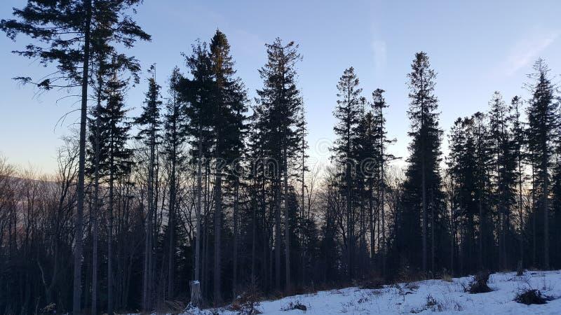 Δέντρο στο βουνό στοκ εικόνες με δικαίωμα ελεύθερης χρήσης