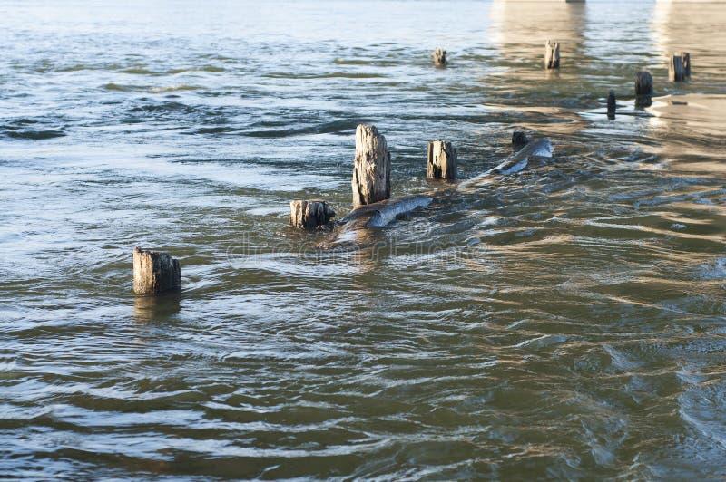 Δέντρο στο νερό στοκ φωτογραφία με δικαίωμα ελεύθερης χρήσης