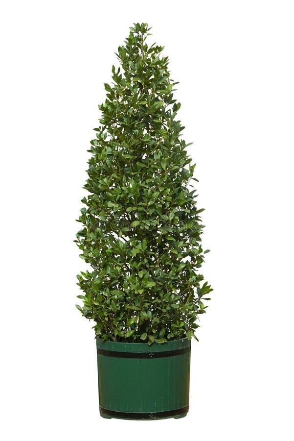 Δέντρο στο δοχείο στοκ εικόνα με δικαίωμα ελεύθερης χρήσης