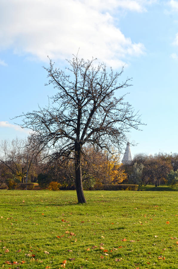 Δέντρο στο πάρκο φθινοπώρου στοκ εικόνες