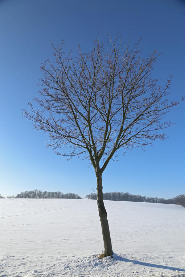 Δέντρο στο χειμερινό τοπίο στοκ εικόνα