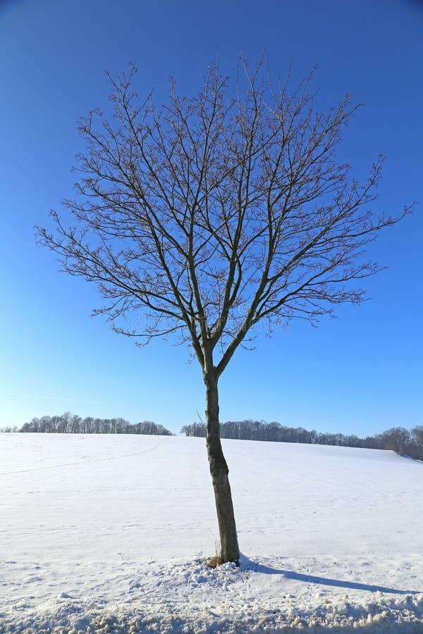 Δέντρο στο χειμερινό τοπίο στοκ φωτογραφία με δικαίωμα ελεύθερης χρήσης
