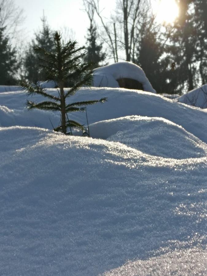 Δέντρο στο χιόνι στοκ εικόνα με δικαίωμα ελεύθερης χρήσης