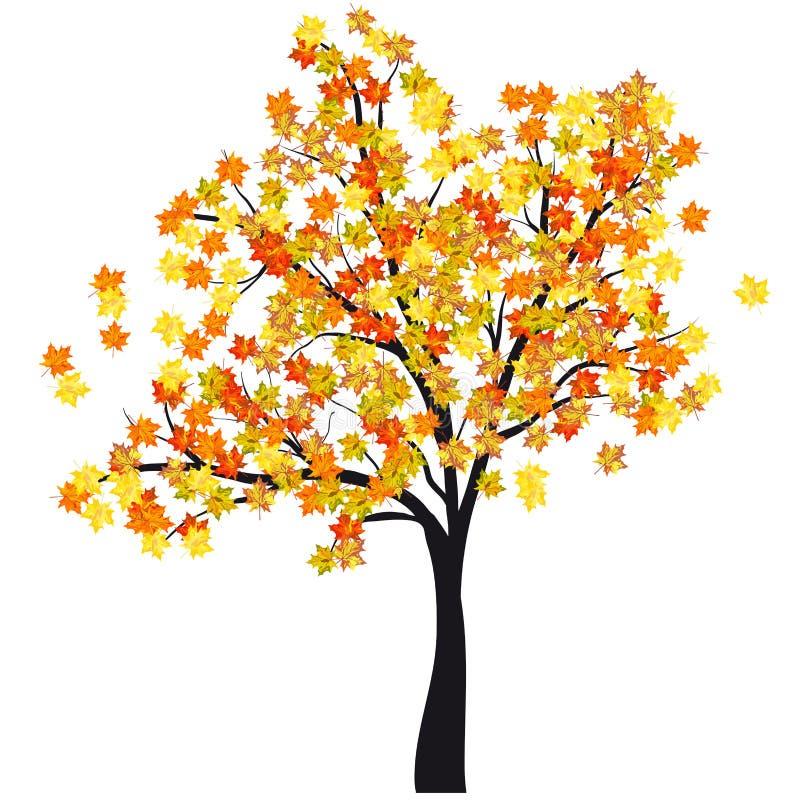 Δέντρο σφενδάμνου φθινοπώρου ελεύθερη απεικόνιση δικαιώματος
