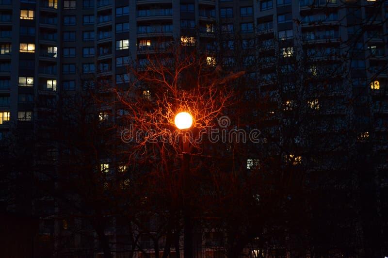 Δέντρο της ζωής μεταξύ των συγκεκριμένων σπιτιών στοκ φωτογραφίες με δικαίωμα ελεύθερης χρήσης